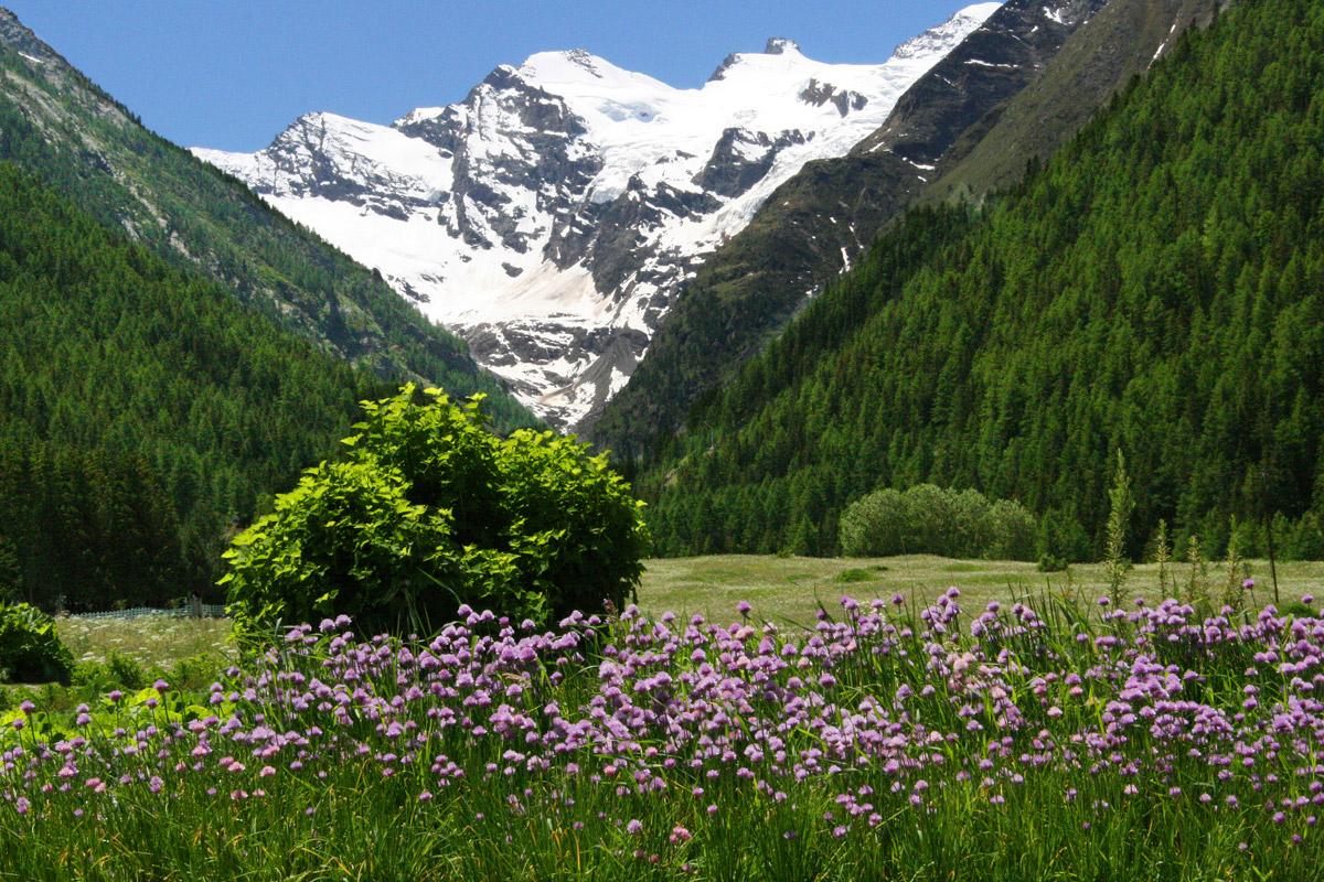 valle-daosta-prato-di-s-orso-e-gran-paradiso-cogne-foto-kondo_0